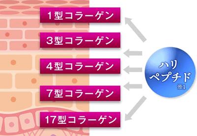 カナデルプレミアリフトオールインワン美容液ジェルの美容成分「ハリペプチド」の効果